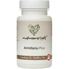 Myconutri Mushrooms4Pets ārstniecisko sēņu maisījums mājdzīvniekiem Armillaria Plus, 60 kaps.